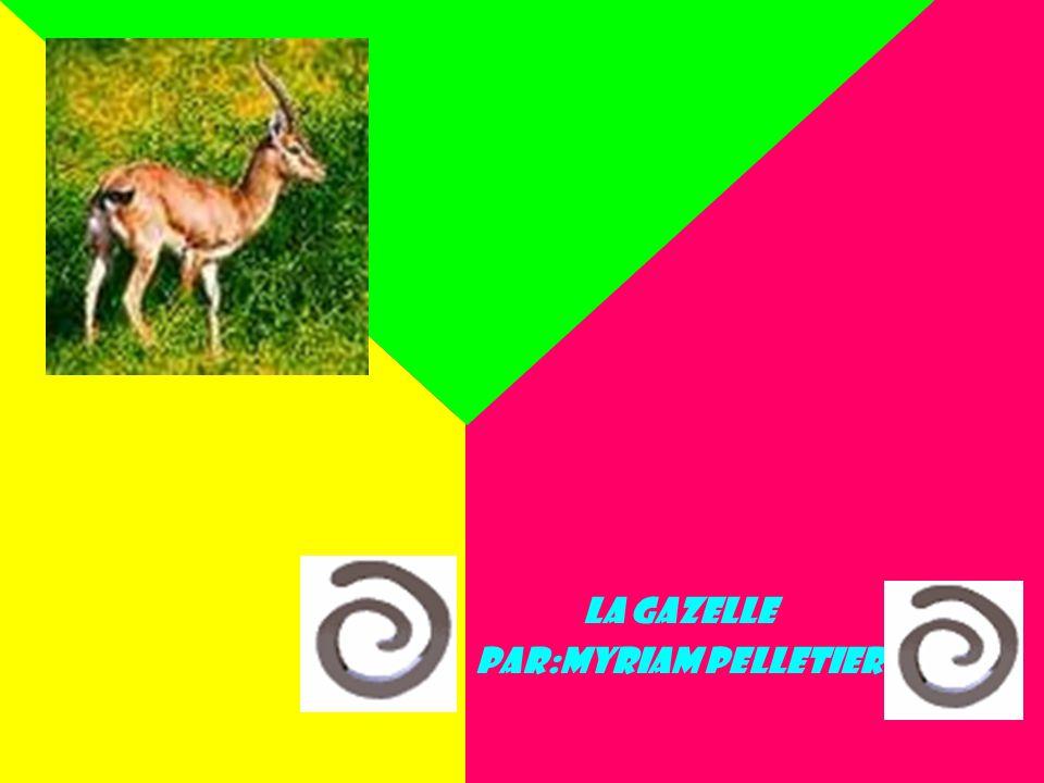 L La gazelle Par:Myriam Pelletier