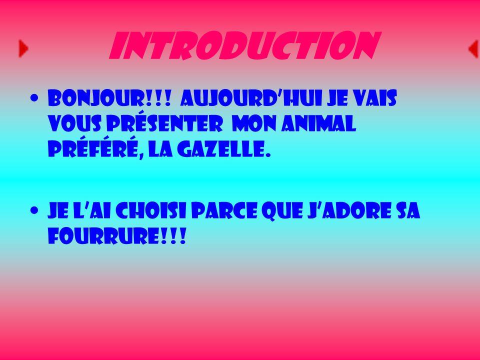 Introduction Bonjour!!! Aujourdhui je vais vous présenter mon animal préféré, la gazelle. Je lai choisi parce que jadore sa fourrure!!!