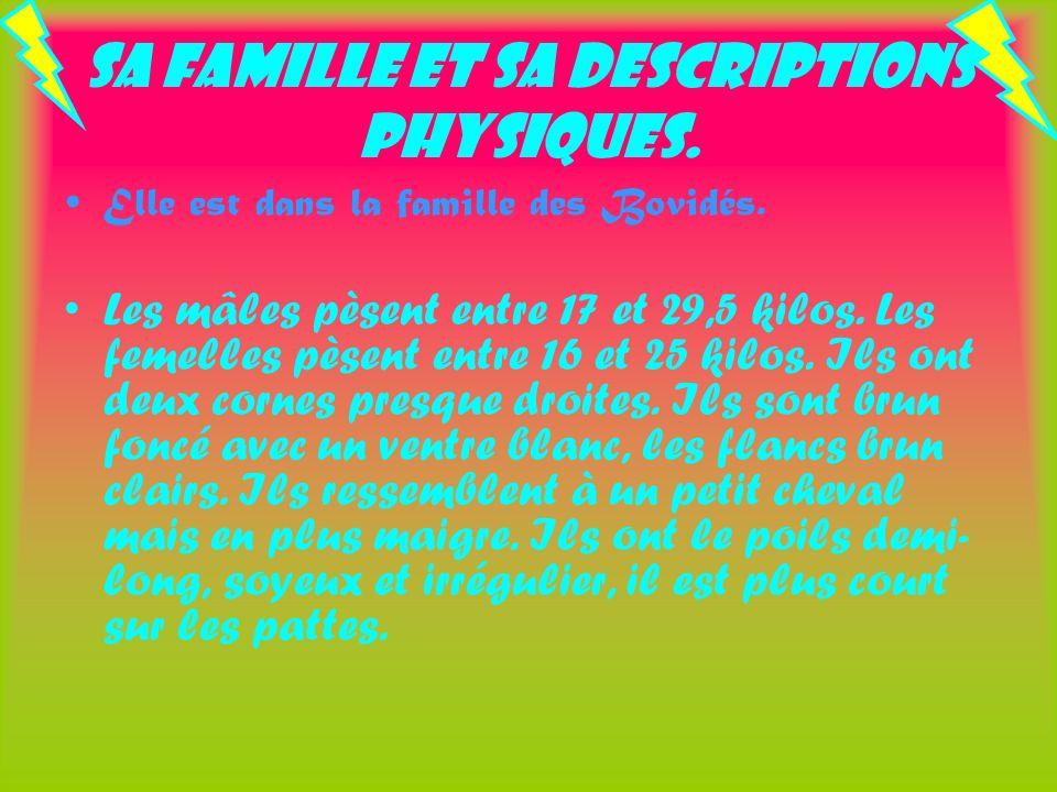 Sa famille et sa descriptions physiques. Elle est dans la famille des Bovidés. Les mâles pèsent entre 17 et 29,5 kilos. Les femelles pèsent entre 16 e