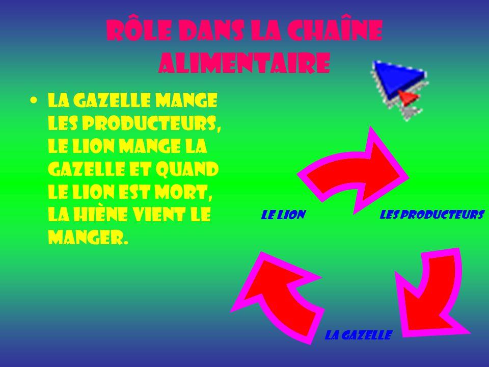 Rôle dans la chaîne alimentaire La gazelle MANGE LES PRODUCTEURS, LE LION MANGE LA GAZELLE ET QUAND LE LION EST MORT, LA HIÈNE VIENT LE MANGER.
