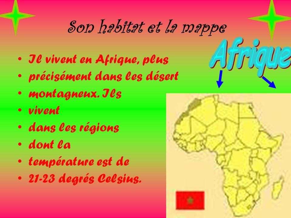 Son habitat et la mappe Il vivent en Afrique, plus précisément dans les désert montagneux. Ils vivent dans les régions dont la température est de 21-2