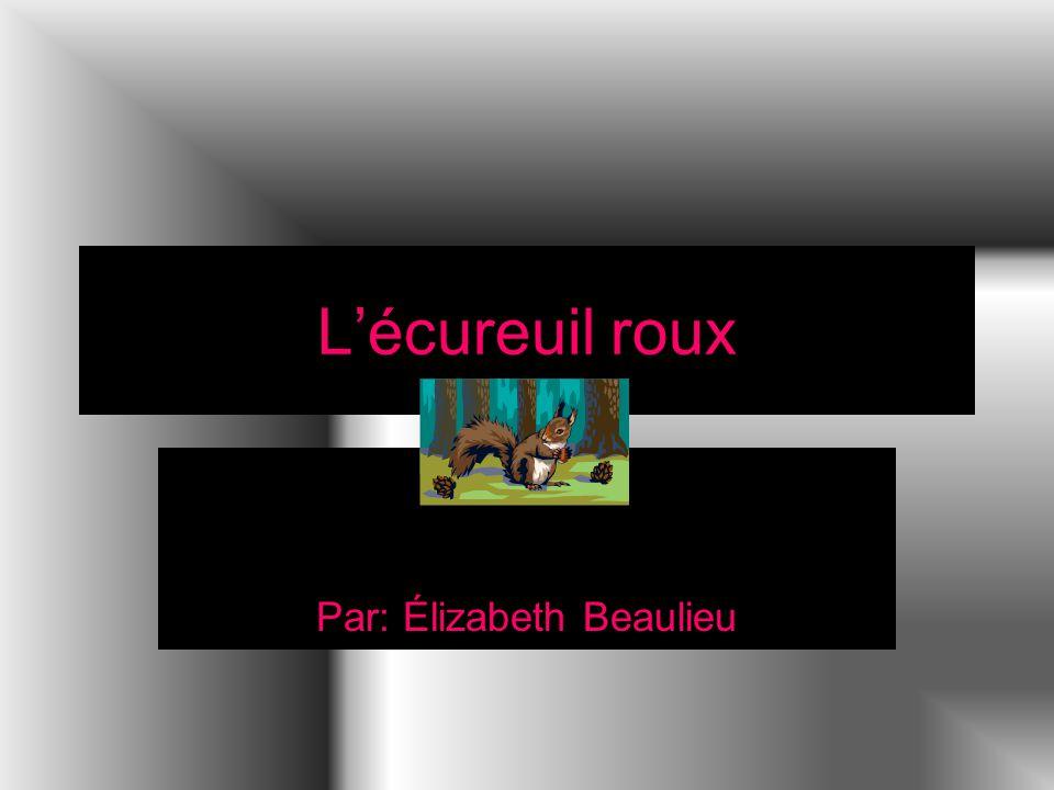 Lécureuil roux Par: Élizabeth Beaulieu