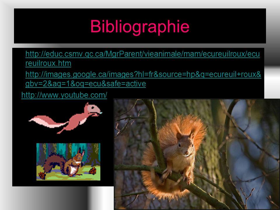 Bibliographie http://educ.csmv.qc.ca/MgrParent/vieanimale/mam/ecureuilroux/ecu reuilroux.htmhttp://educ.csmv.qc.ca/MgrParent/vieanimale/mam/ecureuilroux/ecu reuilroux.htm http://images.google.ca/images?hl=fr&source=hp&q=ecureuil+roux& gbv=2&aq=1&oq=ecu&safe=activehttp://images.google.ca/images?hl=fr&source=hp&q=ecureuil+roux& gbv=2&aq=1&oq=ecu&safe=active http://www.youtube.com/