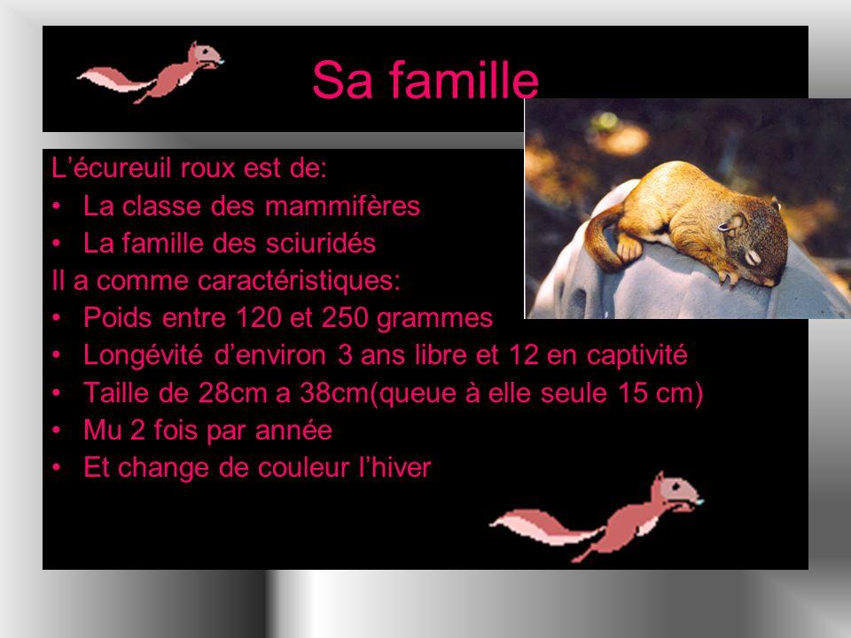 Sa famille Lécureuil roux est de: La classe des mammifères La famille des sciuridés Il a comme caractéristiques: Poids entre 120 et 250 grammes Longévité denviron 3 ans libre et 12 en captivité Taille de 28cm a 38cm(queue à elle seule 15 cm) Mu 2 fois par année Et change de couleur lhiver