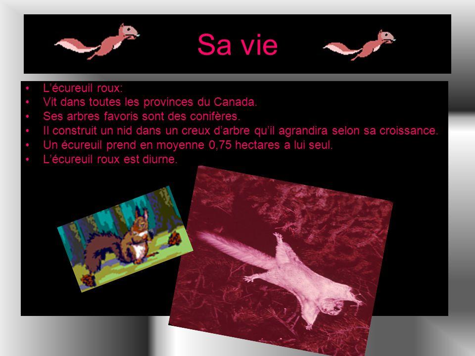 Sa vie Lécureuil roux: Vit dans toutes les provinces du Canada. Ses arbres favoris sont des conifères. Il construit un nid dans un creux darbre quil a