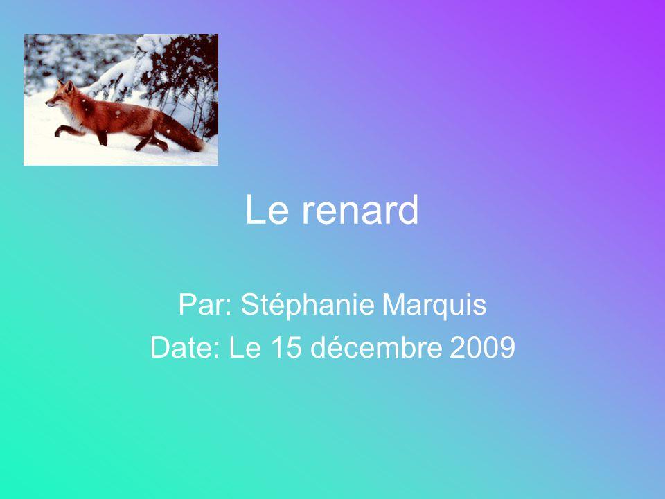 Le renard Par: Stéphanie Marquis Date: Le 15 décembre 2009