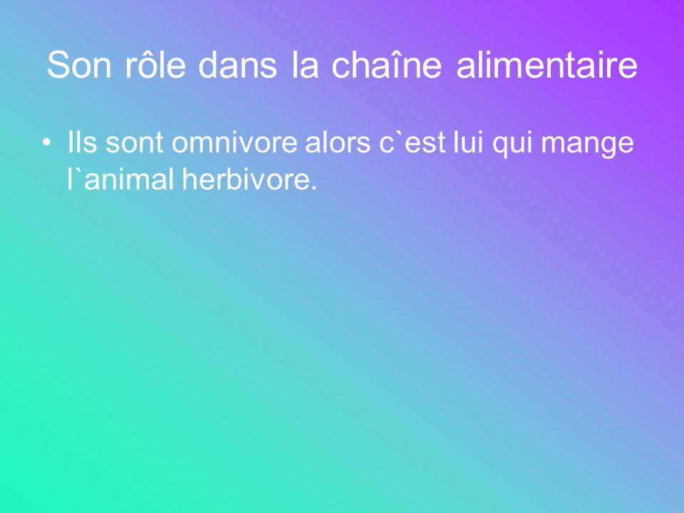 Son rôle dans la chaîne alimentaire Ils sont omnivore alors c`est lui qui mange l`animal herbivore.