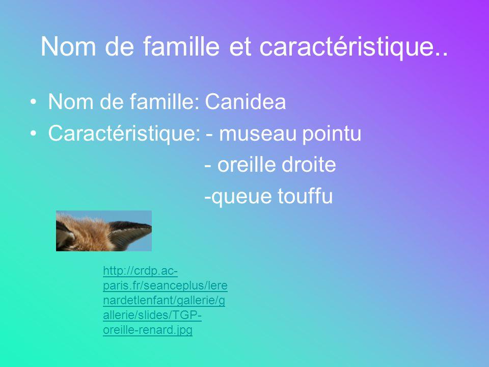 Nom de famille et caractéristique.. Nom de famille: Canidea Caractéristique: - museau pointu - oreille droite -queue touffu http://crdp.ac- paris.fr/s
