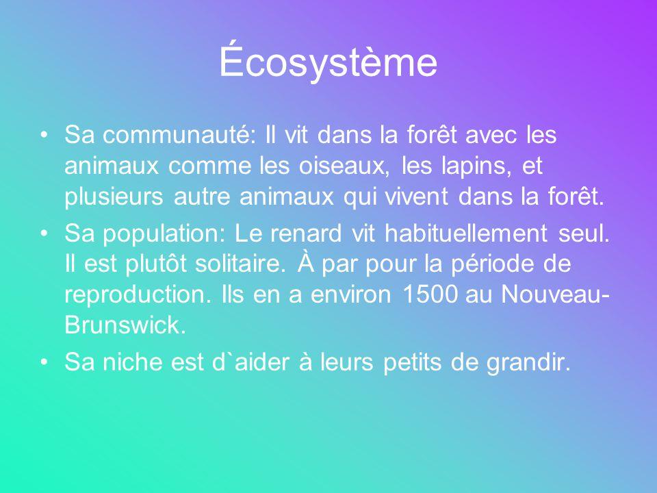 Écosystème Sa communauté: Il vit dans la forêt avec les animaux comme les oiseaux, les lapins, et plusieurs autre animaux qui vivent dans la forêt. Sa