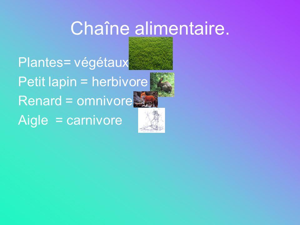 Chaîne alimentaire. Plantes= végétaux Petit lapin = herbivore Renard = omnivore Aigle = carnivore