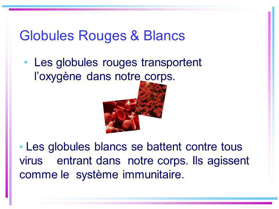 Globules Rouges & Blancs Les globules rouges transportent loxygène dans notre corps. Les globules blancs se battent contre tous virus entrant dans not