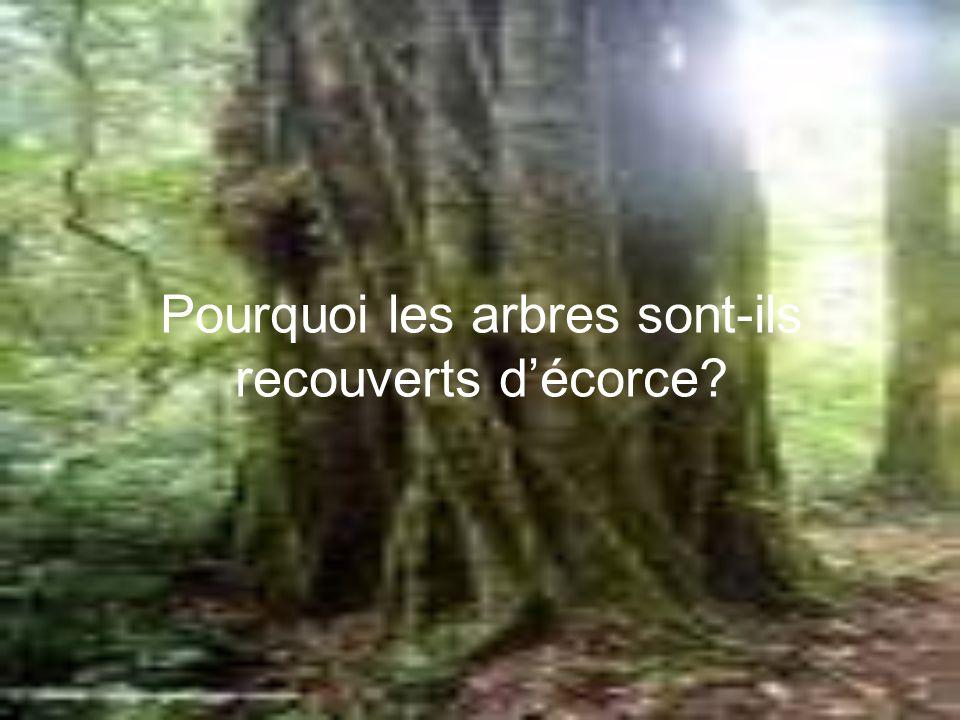 Pourquoi les arbres sont-ils recouverts décorce