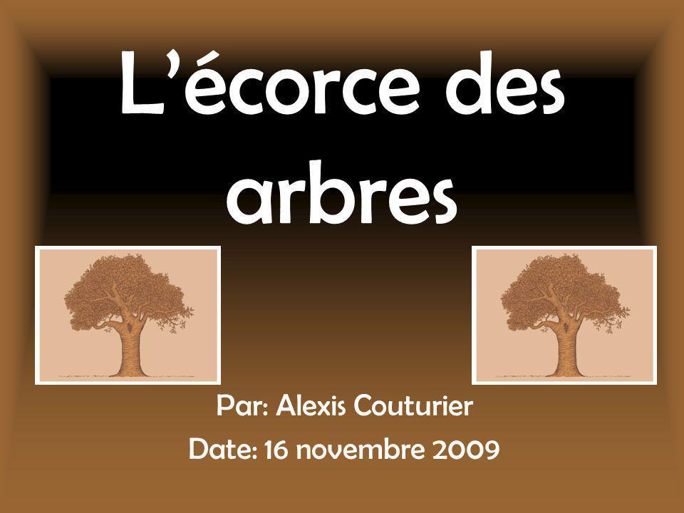 Lécorce des arbres Par: Alexis Couturier Date: 16 novembre 2009