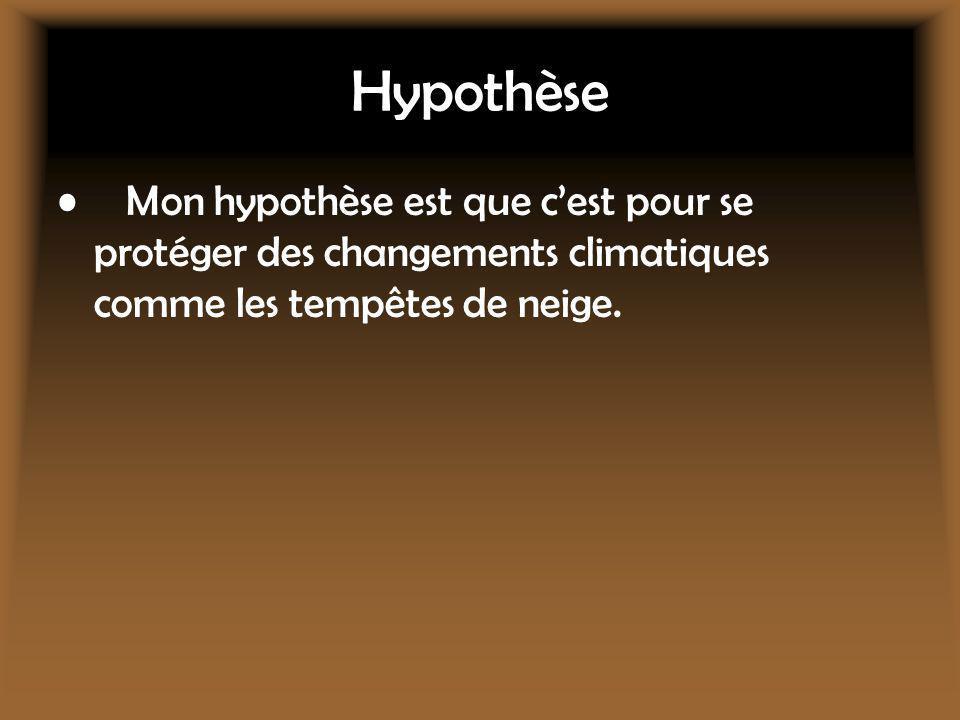 Hypothèse Mon hypothèse est que cest pour se protéger des changements climatiques comme les tempêtes de neige.