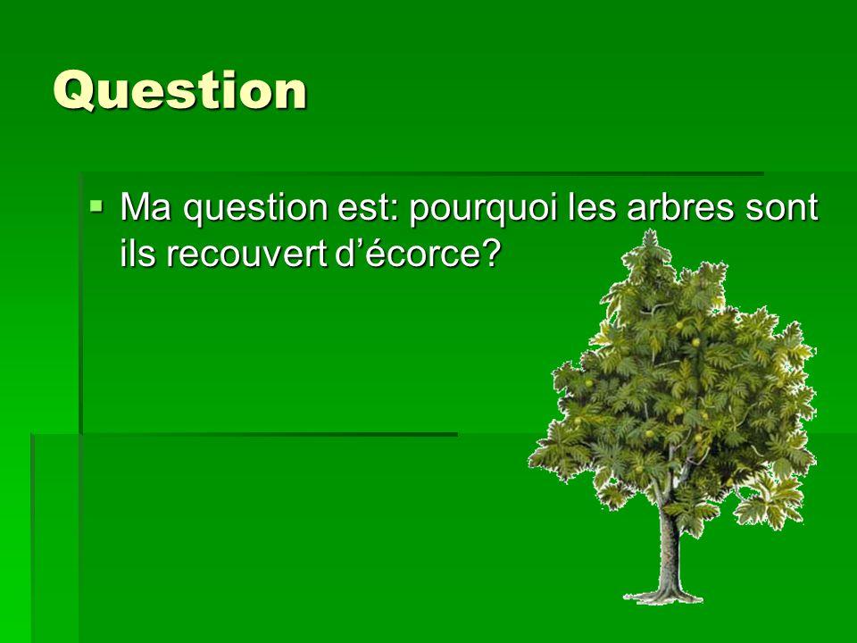 Question Ma question est: pourquoi les arbres sont ils recouvert décorce? Ma question est: pourquoi les arbres sont ils recouvert décorce?