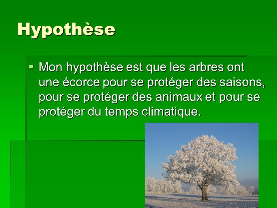 Hypothèse Mon hypothèse est que les arbres ont une écorce pour se protéger des saisons, pour se protéger des animaux et pour se protéger du temps clim