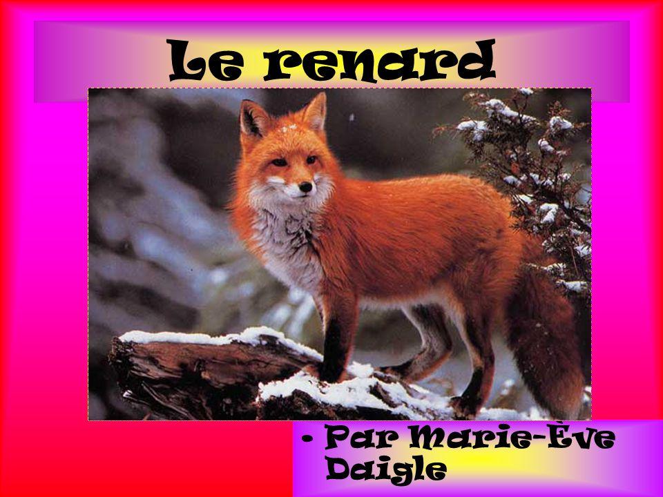 Conclusion Les renard sont des animaux qui ont beaucoup de caractéristique et ils mangent beaucoup de chose comme l`homme.
