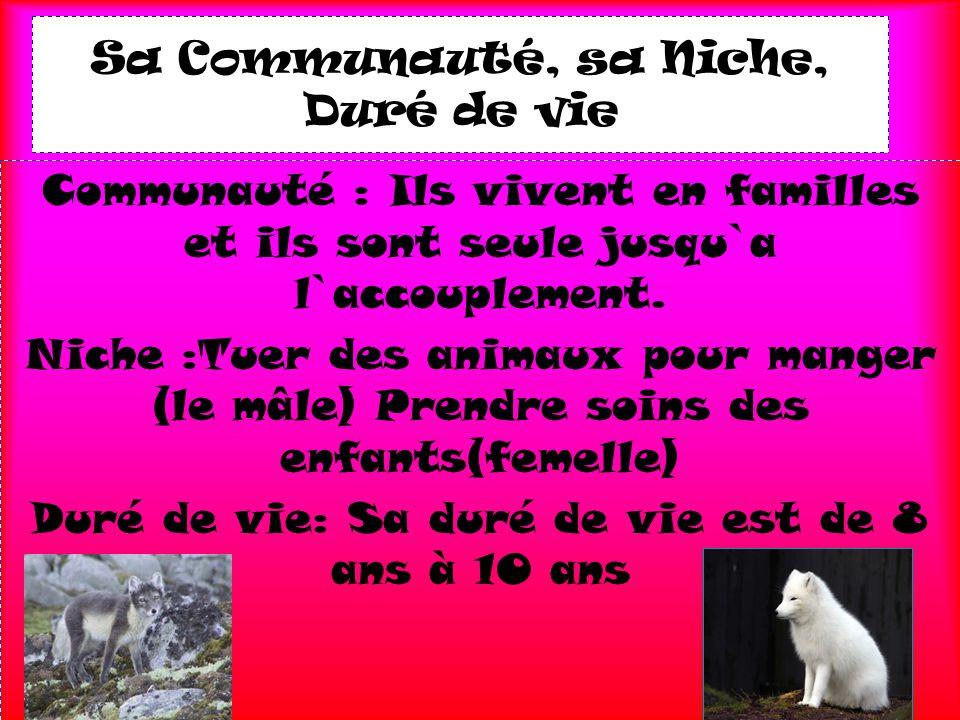 Sa Communauté, sa Niche, Duré de vie Communauté : Ils vivent en familles et ils sont seule jusqu`a l`accouplement. Niche :Tuer des animaux pour manger
