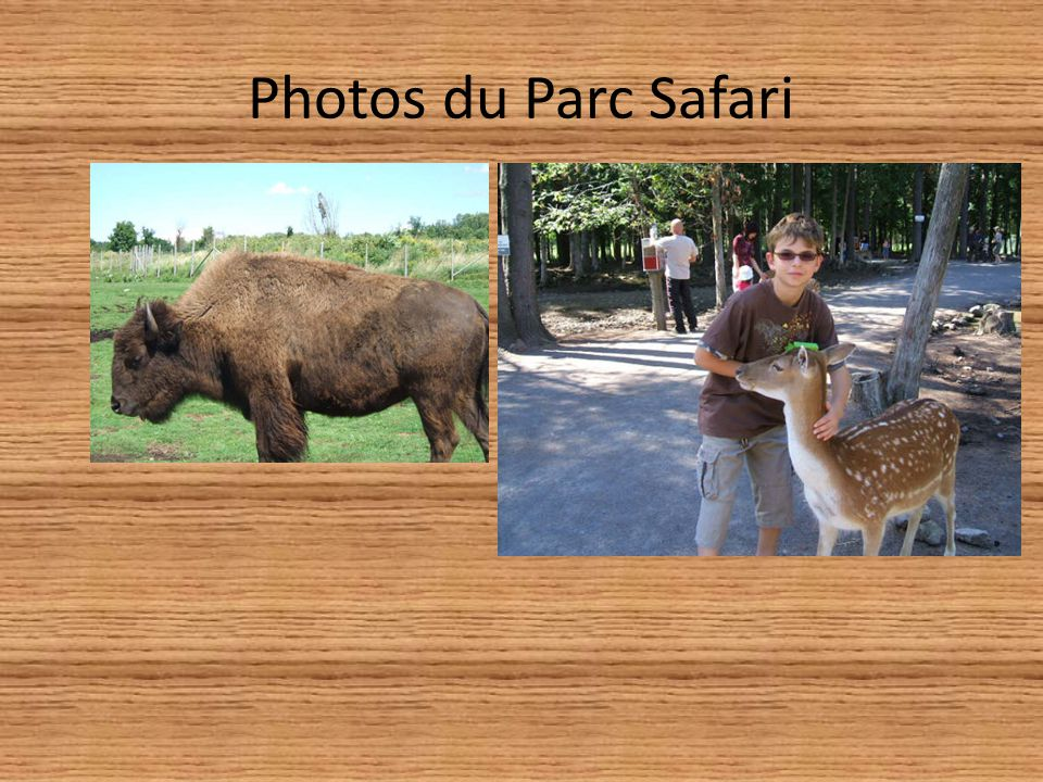 Photos du Parc Safari