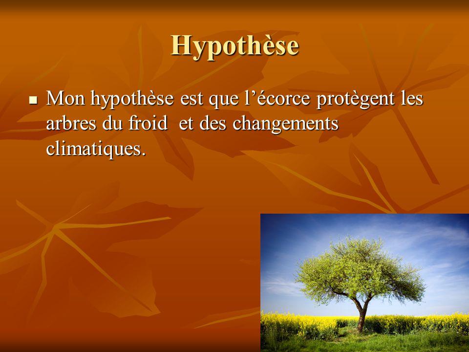 Hypothèse Mon hypothèse est que lécorce protègent les arbres du froid et des changements climatiques. Mon hypothèse est que lécorce protègent les arbr