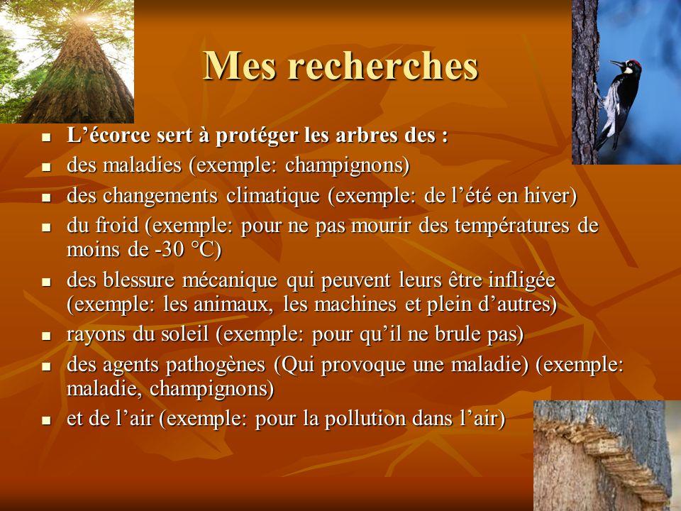 Mes recherches Lécorce sert à protéger les arbres des : Lécorce sert à protéger les arbres des : des maladies (exemple: champignons) des maladies (exemple: champignons) des changements climatique (exemple: de lété en hiver) des changements climatique (exemple: de lété en hiver) du froid (exemple: pour ne pas mourir des températures de moins de -30 °C) du froid (exemple: pour ne pas mourir des températures de moins de -30 °C) des blessure mécanique qui peuvent leurs être infligée (exemple: les animaux, les machines et plein dautres) des blessure mécanique qui peuvent leurs être infligée (exemple: les animaux, les machines et plein dautres) rayons du soleil (exemple: pour quil ne brule pas) rayons du soleil (exemple: pour quil ne brule pas) des agents pathogènes (Qui provoque une maladie) (exemple: maladie, champignons) des agents pathogènes (Qui provoque une maladie) (exemple: maladie, champignons) et de lair (exemple: pour la pollution dans lair) et de lair (exemple: pour la pollution dans lair)