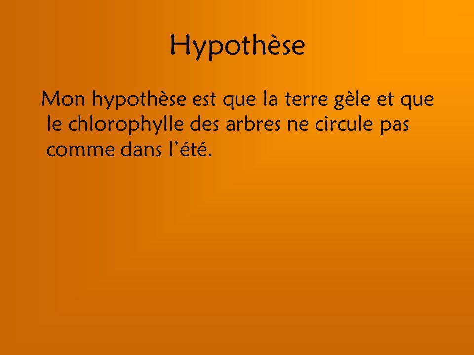 Hypothèse Mon hypothèse est que la terre gèle et que le chlorophylle des arbres ne circule pas comme dans lété.