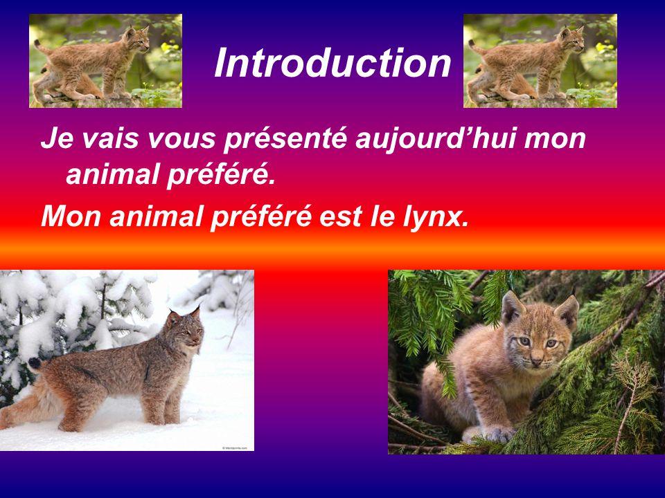 Introduction Je vais vous présenté aujourdhui mon animal préféré. Mon animal préféré est le lynx.