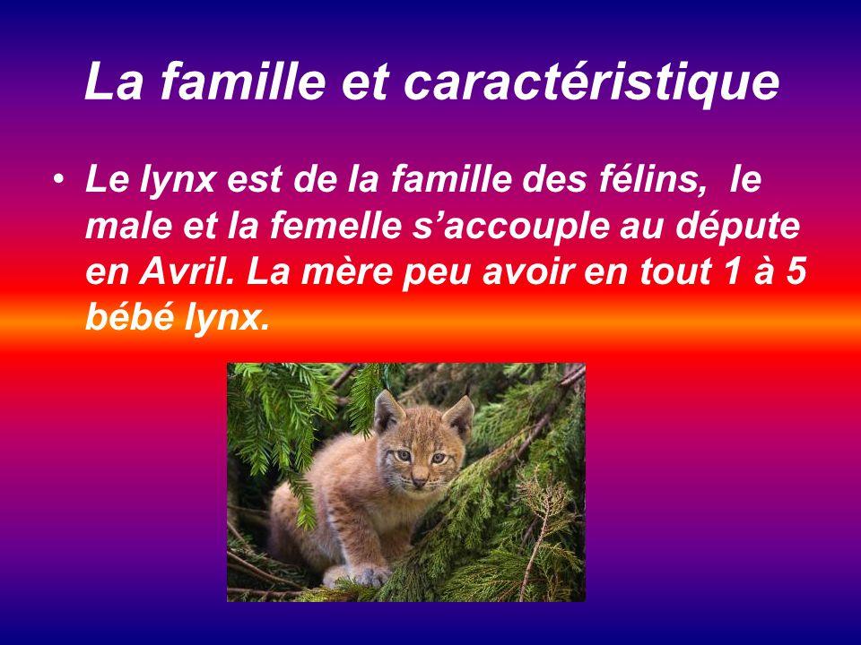 La famille et caractéristique Le lynx est de la famille des félins, le male et la femelle saccouple au députe en Avril.