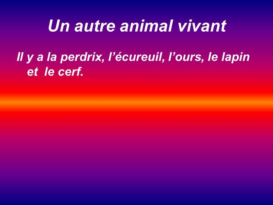 Un autre animal vivant Il y a la perdrix, lécureuil, lours, le lapin et le cerf.