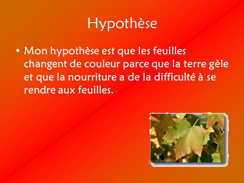 Hypothèse Mon hypothèse est que les feuilles changent de couleur parce que la terre gèle et que la nourriture a de la difficulté à se rendre aux feuil