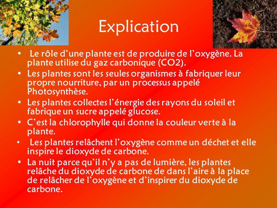 Explication Le rôle dune plante est de produire de loxygène. La plante utilise du gaz carbonique (CO2). Les plantes sont les seules organismes à fabri