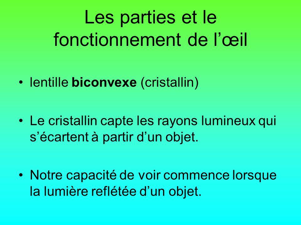Les parties et le fonctionnement de lœil lentille biconvexe (cristallin) Le cristallin capte les rayons lumineux qui sécartent à partir dun objet.