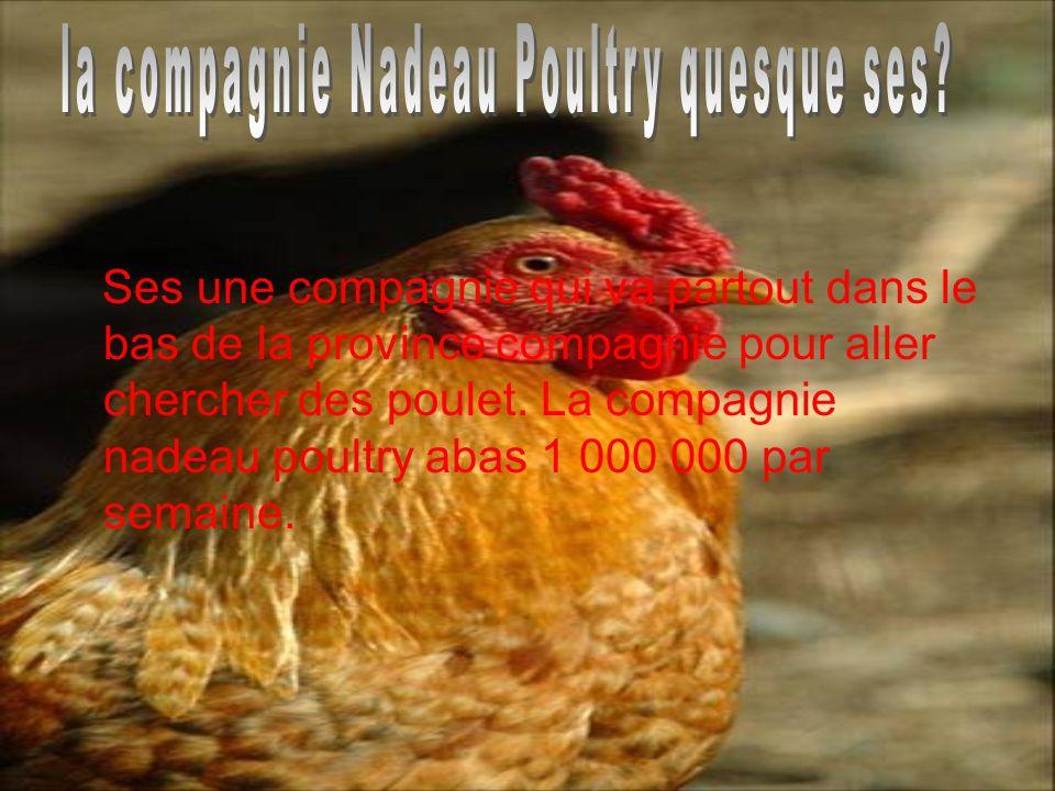 Ses une compagnie qui va partout dans le bas de la province compagnie pour aller chercher des poulet.