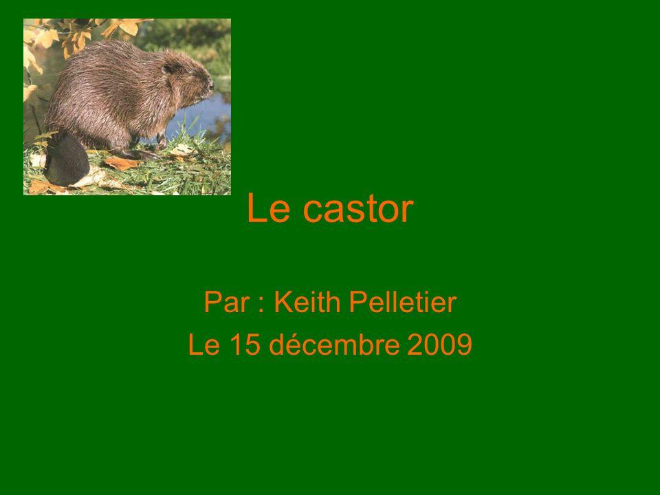 Le castor Par : Keith Pelletier Le 15 décembre 2009