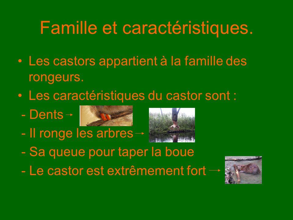 Famille et caractéristiques. Les castors appartient à la famille des rongeurs. Les caractéristiques du castor sont : - Dents - Il ronge les arbres - S