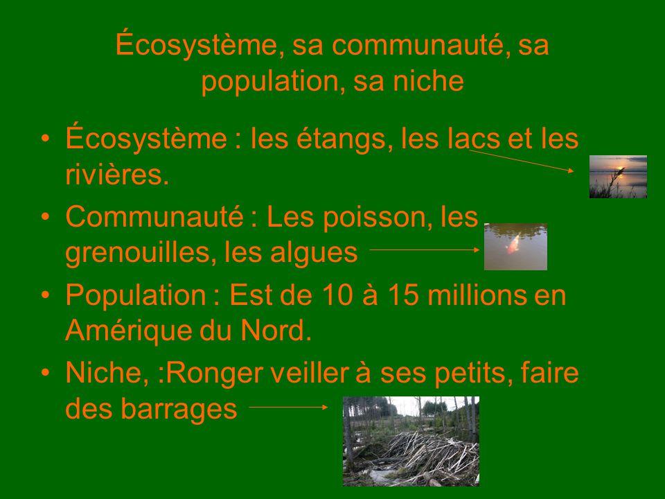Écosystème, sa communauté, sa population, sa niche Écosystème : les étangs, les lacs et les rivières. Communauté : Les poisson, les grenouilles, les a