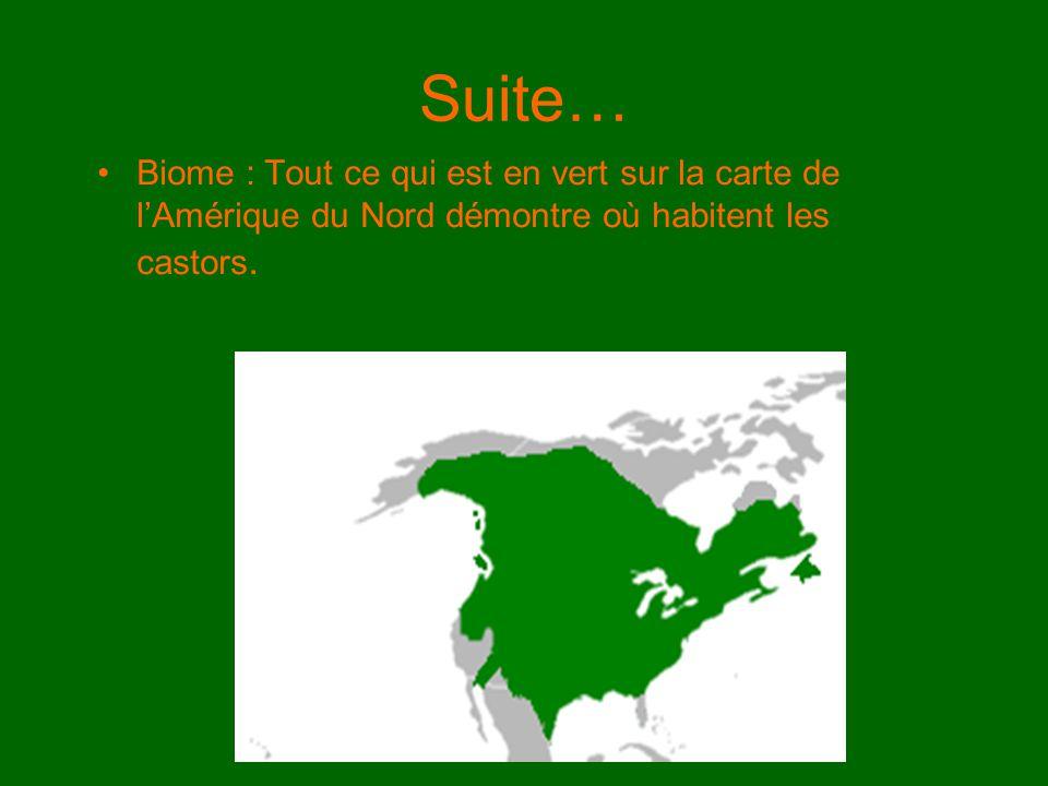 Suite… Biome : Tout ce qui est en vert sur la carte de lAmérique du Nord démontre où habitent les castors.