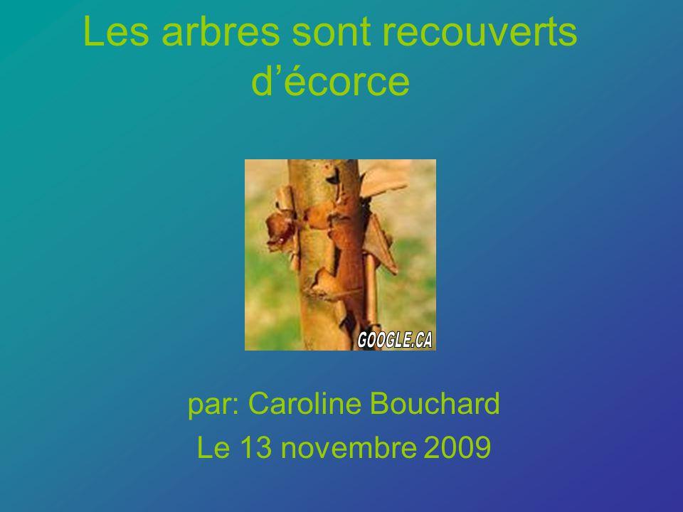 Les arbres sont recouverts décorce par: Caroline Bouchard Le 13 novembre 2009