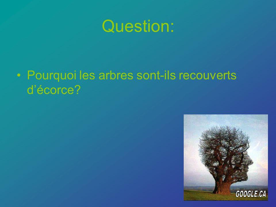 Question: Pourquoi les arbres sont-ils recouverts décorce