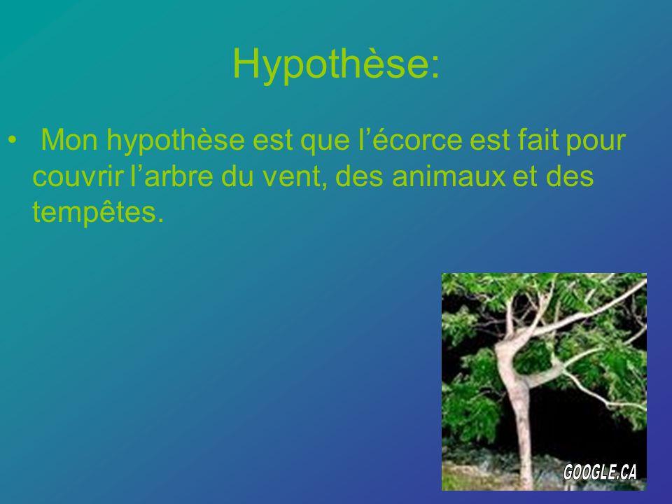 Hypothèse: Mon hypothèse est que lécorce est fait pour couvrir larbre du vent, des animaux et des tempêtes.