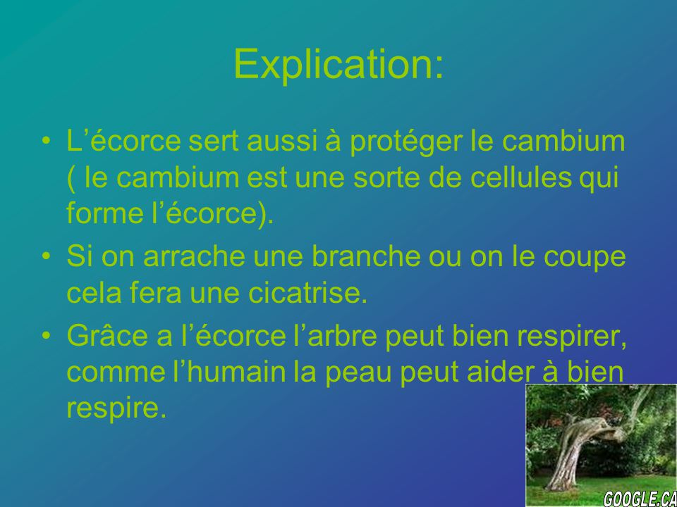 Explication: Lécorce sert aussi à protéger le cambium ( le cambium est une sorte de cellules qui forme lécorce).