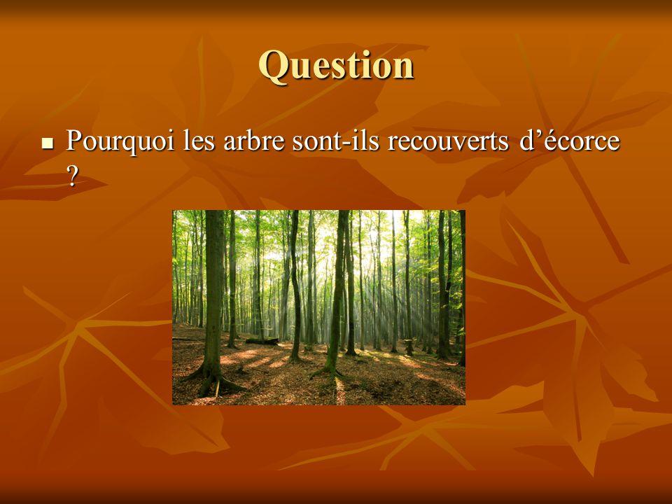 Question Pourquoi les arbre sont-ils recouverts décorce .
