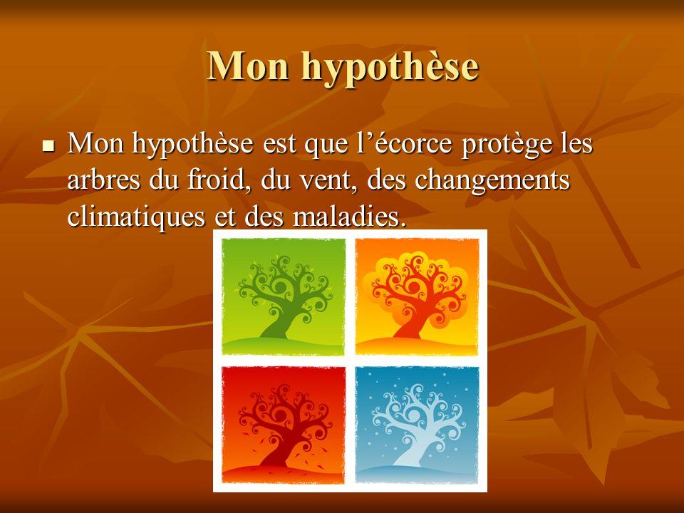 Mon hypothèse Mon hypothèse est que lécorce protège les arbres du froid, du vent, des changements climatiques et des maladies.