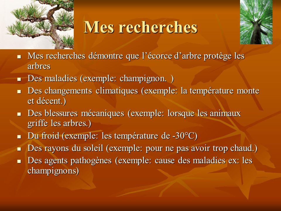 Mes recherches Mes recherches démontre que lécorce darbre protège les arbres Mes recherches démontre que lécorce darbre protège les arbres Des maladies (exemple: champignon.