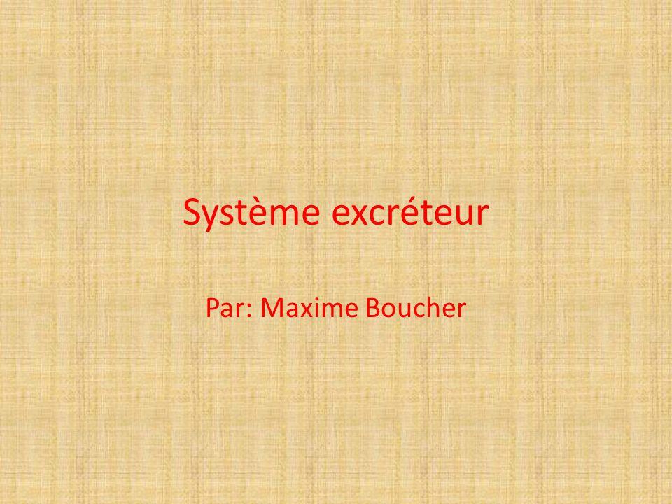Système excréteur Par: Maxime Boucher