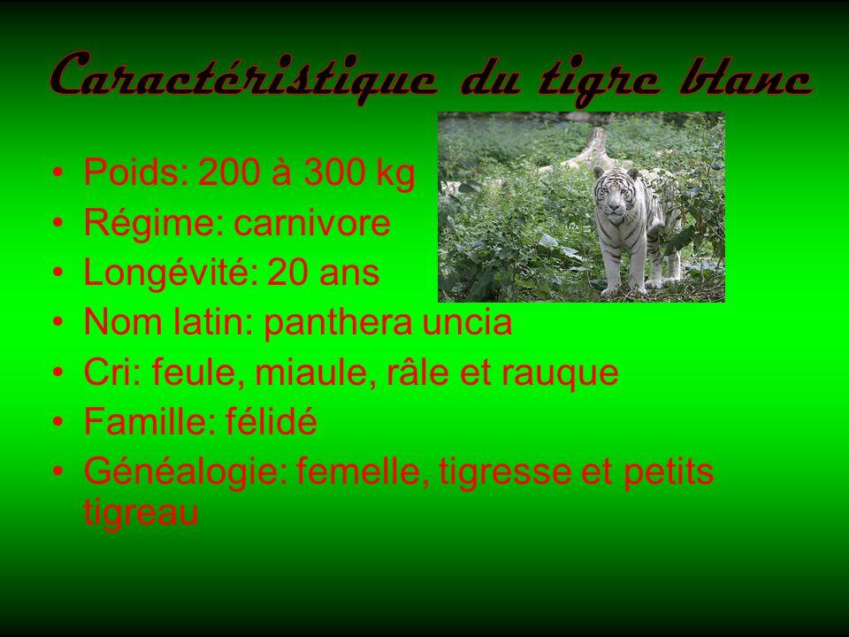 Poids: 200 à 300 kg Régime: carnivore Longévité: 20 ans Nom latin: panthera uncia Cri: feule, miaule, râle et rauque Famille: félidé Généalogie: femelle, tigresse et petits tigreau