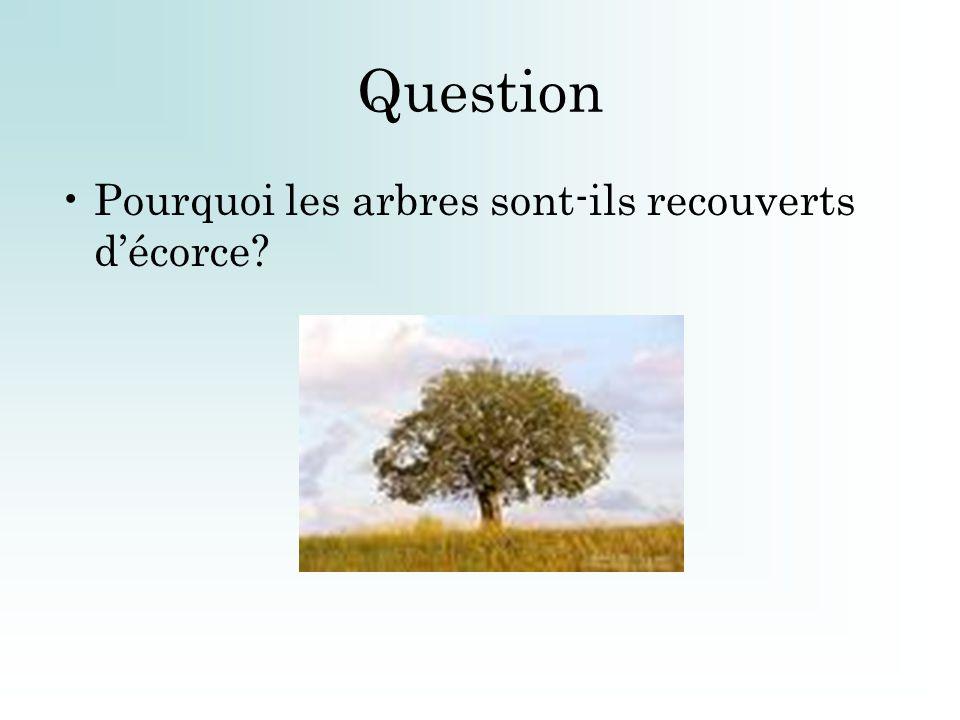 Question Pourquoi les arbres sont-ils recouverts décorce?