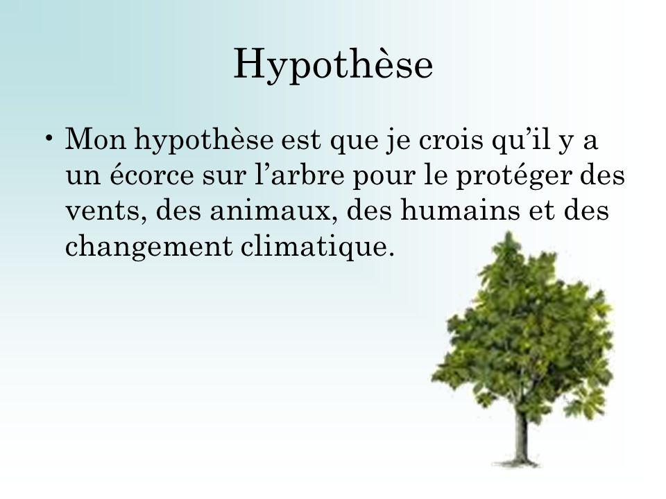 Hypothèse Mon hypothèse est que je crois quil y a un écorce sur larbre pour le protéger des vents, des animaux, des humains et des changement climatiq