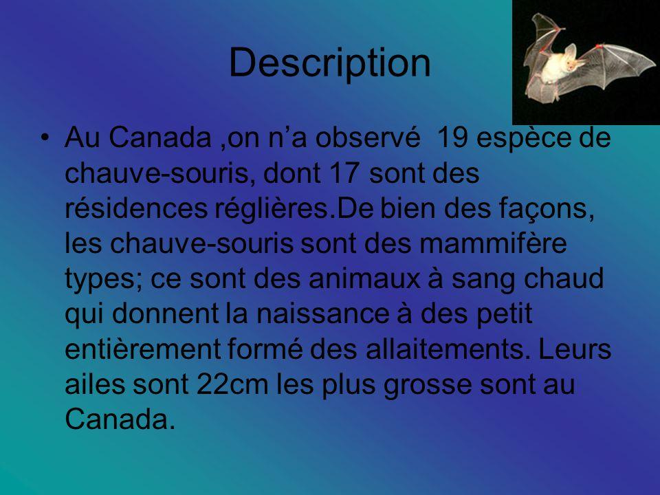 Description Au Canada,on na observé 19 espèce de chauve-souris, dont 17 sont des résidences réglières.De bien des façons, les chauve-souris sont des mammifère types; ce sont des animaux à sang chaud qui donnent la naissance à des petit entièrement formé des allaitements.