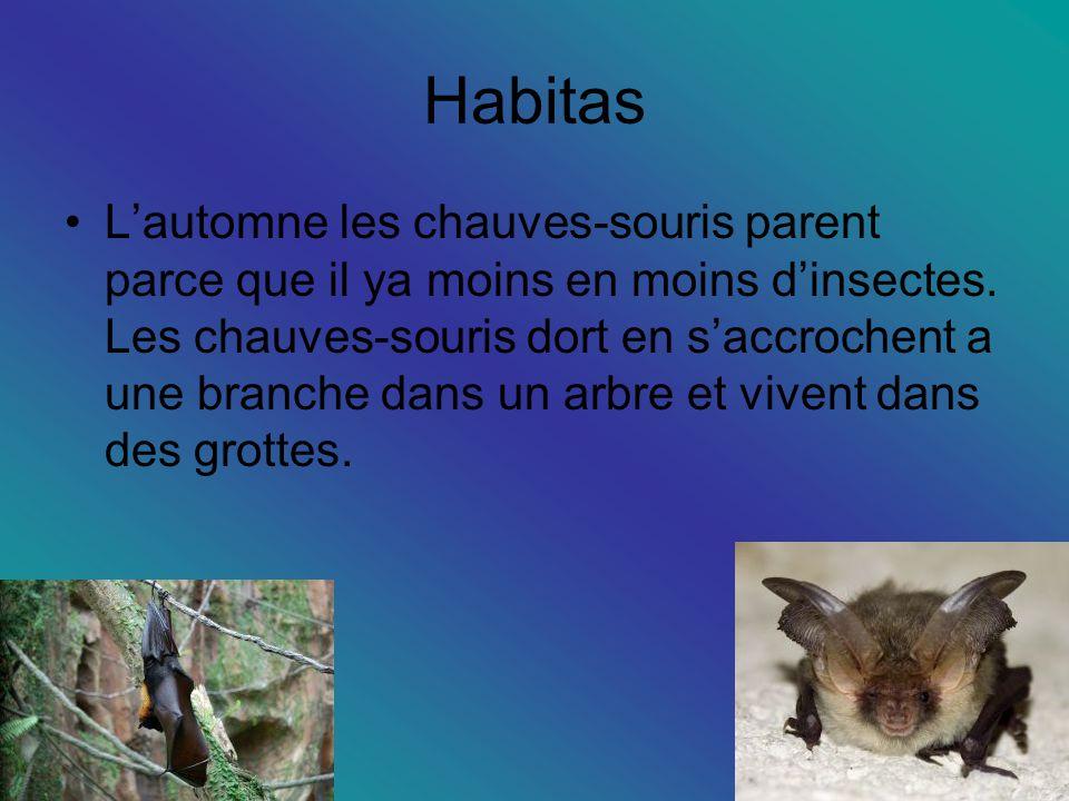 Habitas Lautomne les chauves-souris parent parce que il ya moins en moins dinsectes.